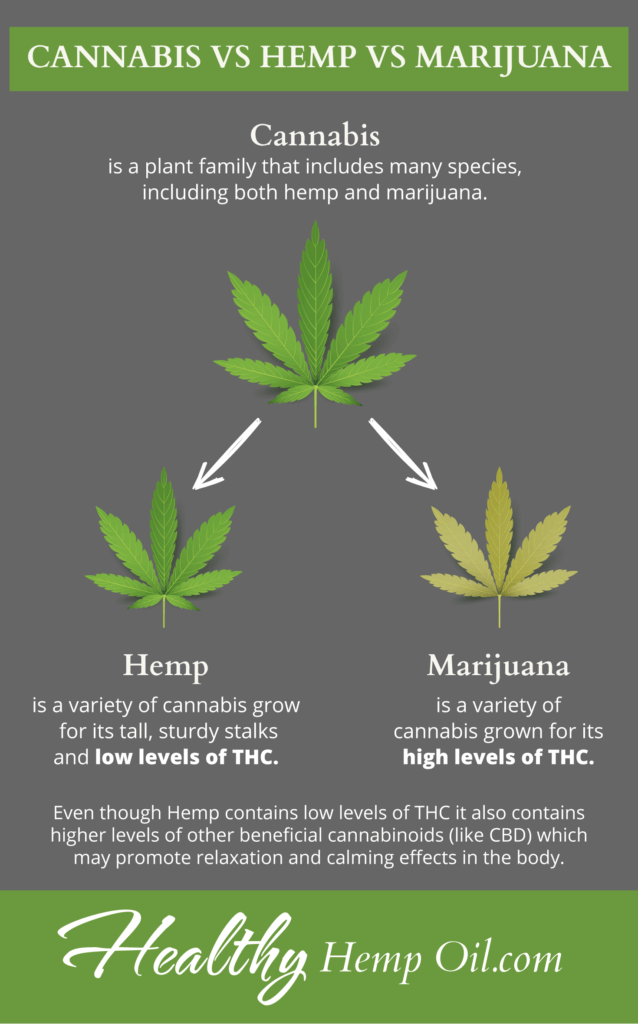 Cannabis vs Hemp vs Marijuana
