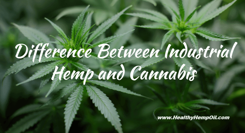 Difference Between Industrial Hemp and Cannabis - Featured Image