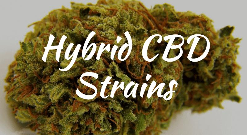 High CBD Strains - Hybrid Strains