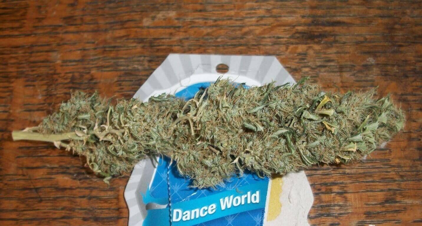 High CBD Strains - Dance World