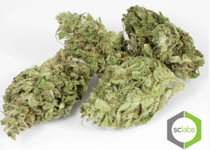 High CBD Strains - GI001