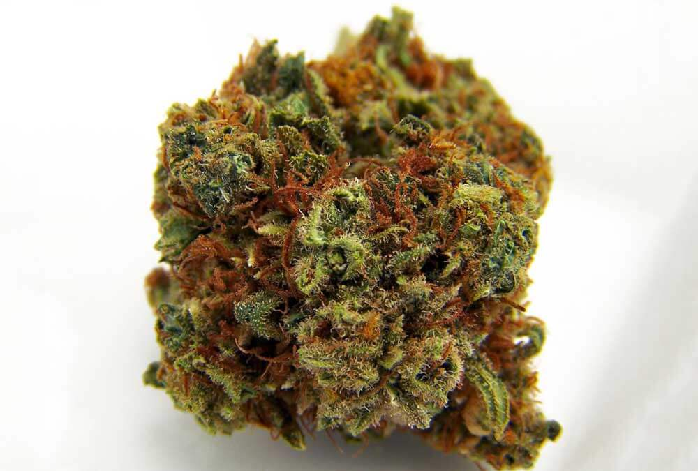 High CBD Strains - Ringo's Gift