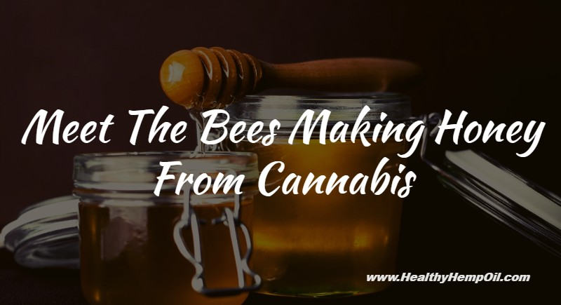 Bees Making Honey From Cannabis