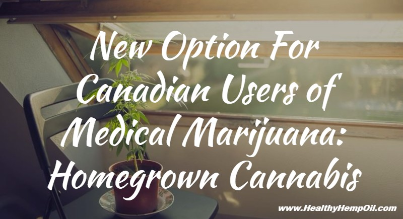 new-option-for-canadian-users-of-medical-marijuana-homegrown-cannabis