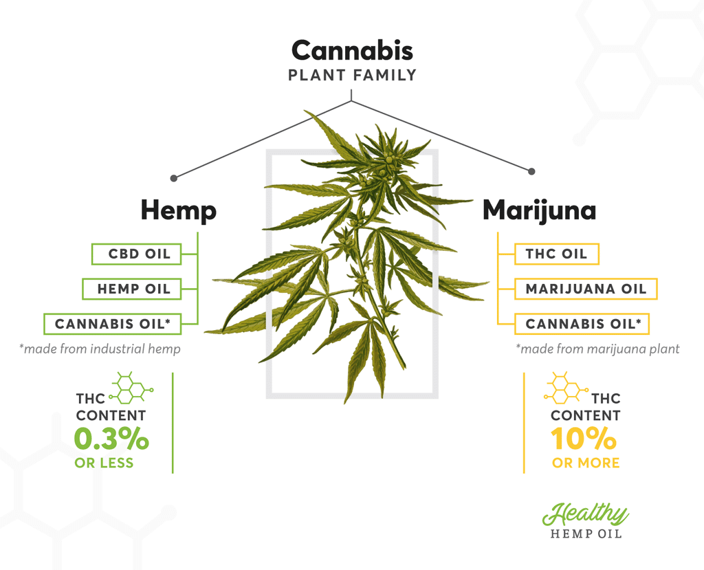 Can You (Legally) Buy THC Oil, Cannabis Oil or Marijuana Oil - Hemp vs Marijuana