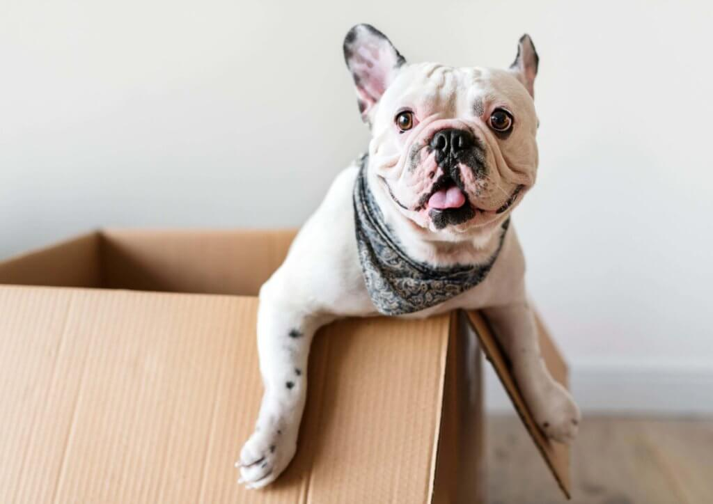 Dog in box keep pets safe during holidays